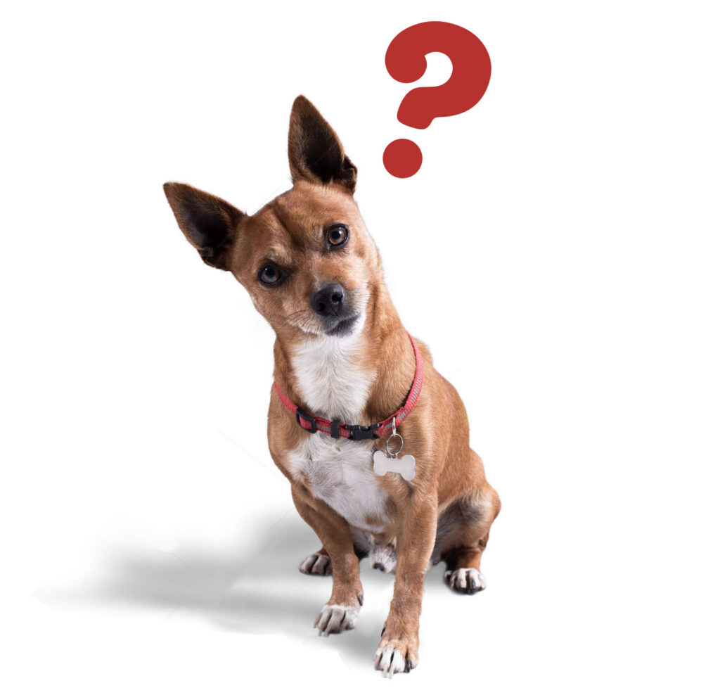 FAQ for Veterinary Locum Agency